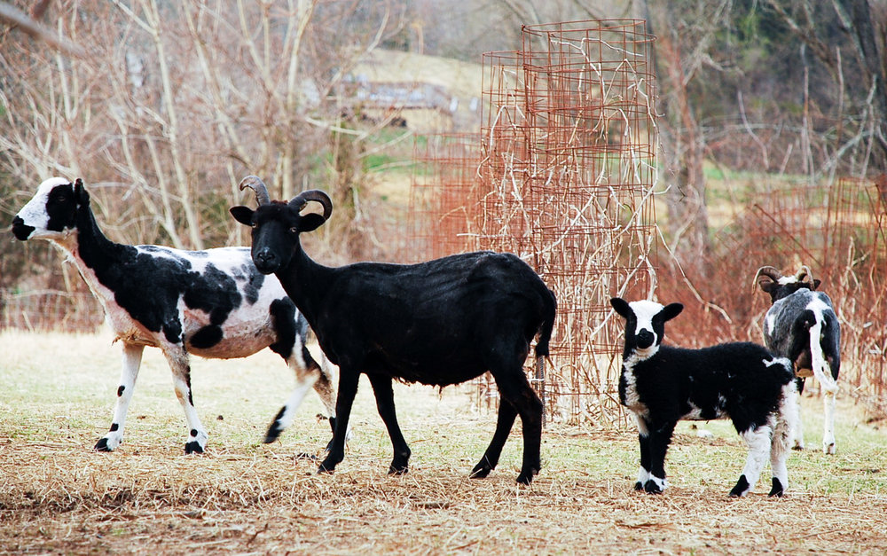 HH Farm Shearing 2018-78.jpg