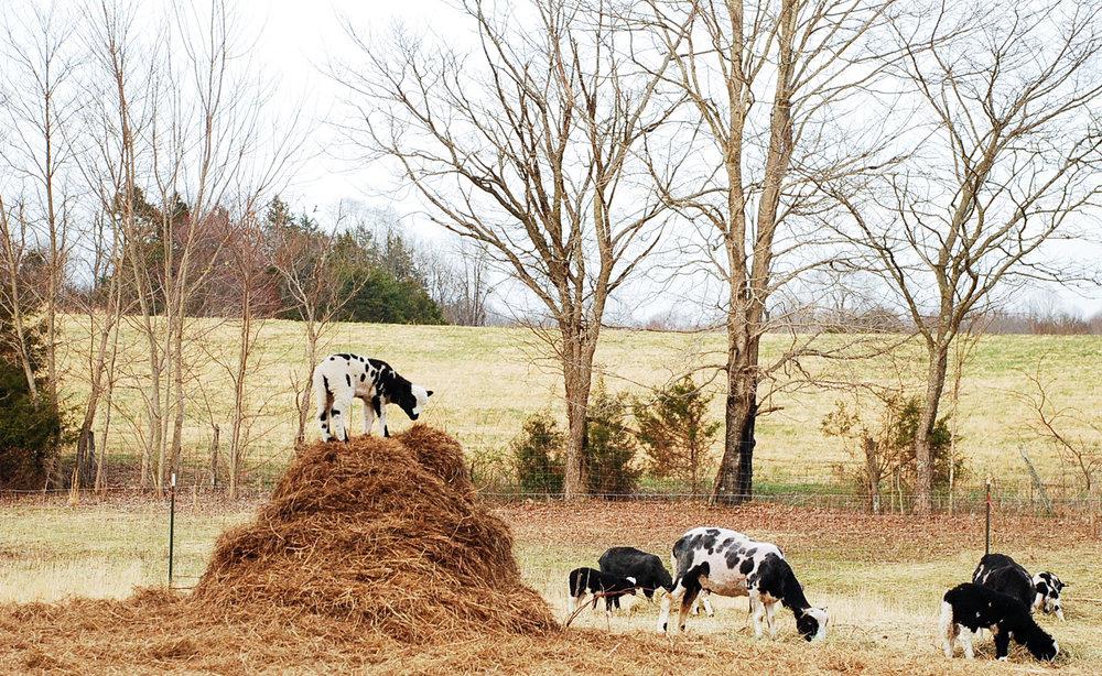 HH Farm Shearing 2018-79.jpg