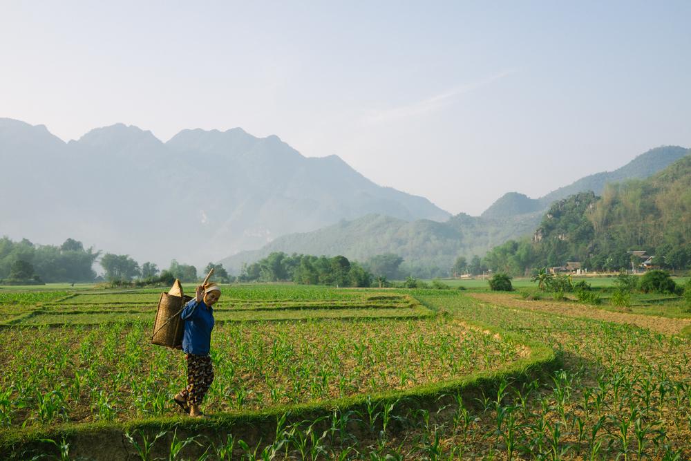 vietnam-project-apr-2015_0062.JPG