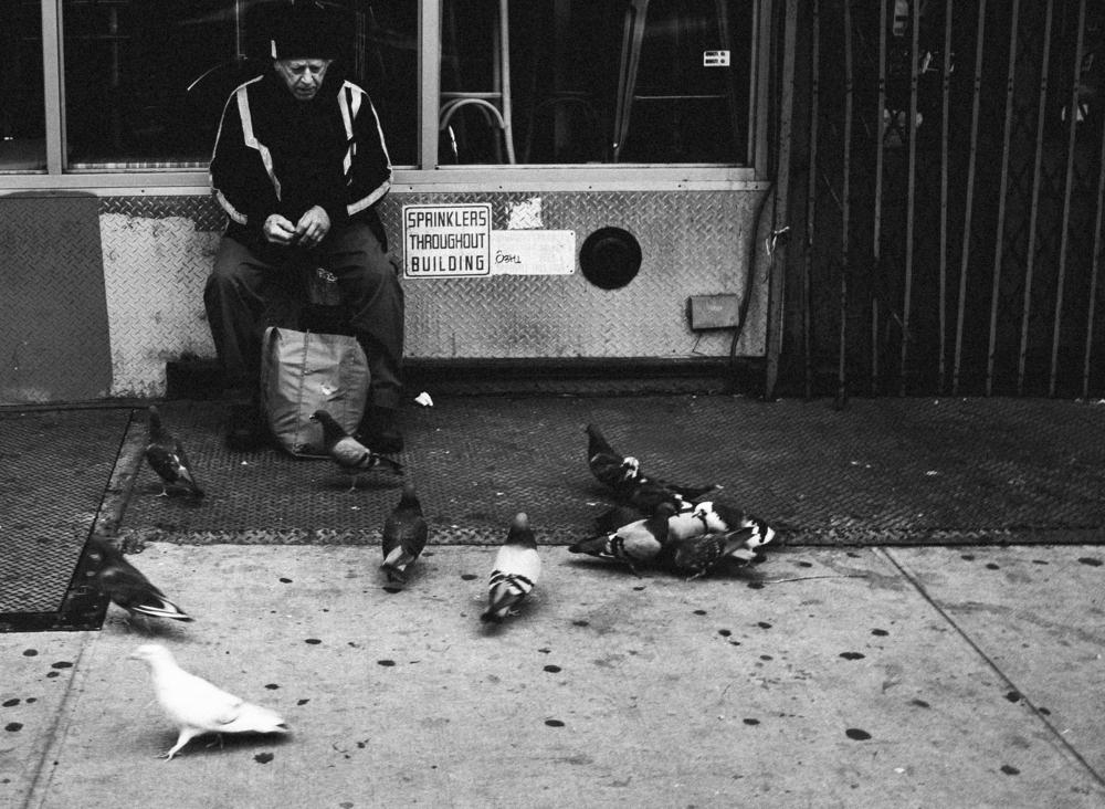 ***Birds.jpg