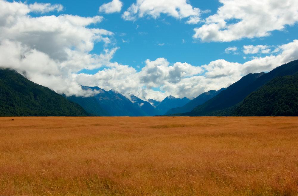 FiordlandNationalParkField.jpg