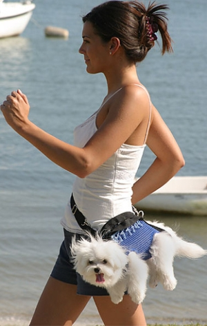 It's way too stressful to walk. Carry your dog instead!