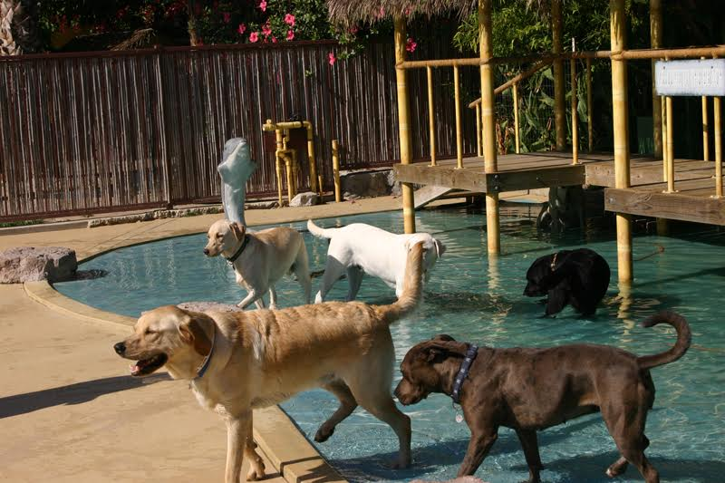 Dog ranch