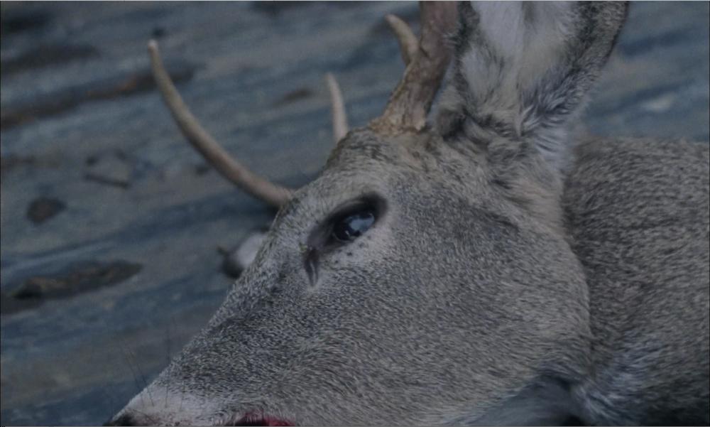 SS_Deer.png