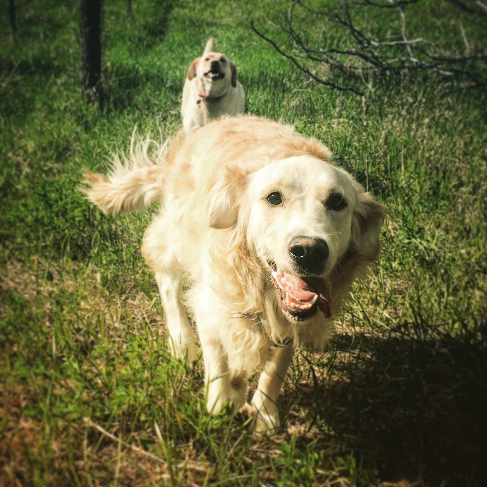 Dog Boarding Ontario County