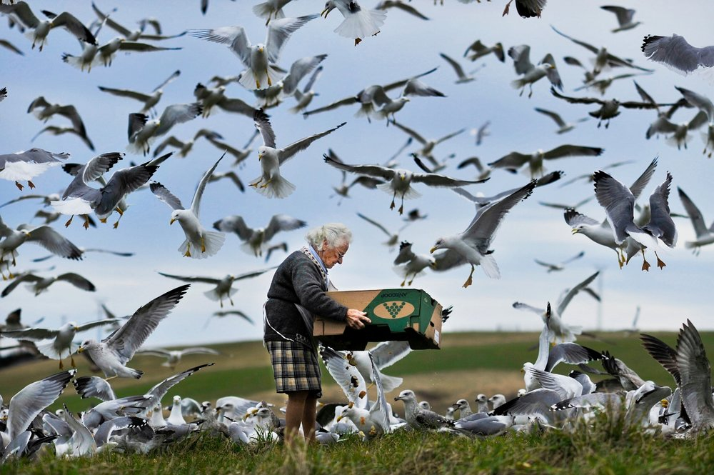 A woman feeds thousands of sea gulls from a box of leftovers on the seaside cliffs of Liencres, Spain.