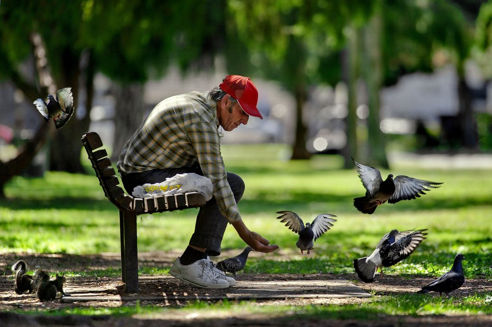 Michael Plevel of Rio Linda feeds the pigeons and squirrels at McKinley Park in Sacramento on Tuesday, August 31, 2010.