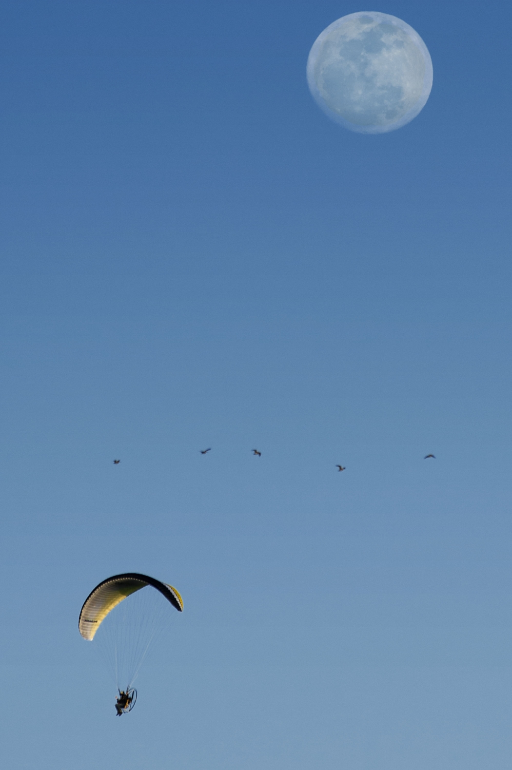 A flock of ducks flies past an ultralight pilot near White Rock Road in El Dorado Hills on Friday, March 14, 2014.
