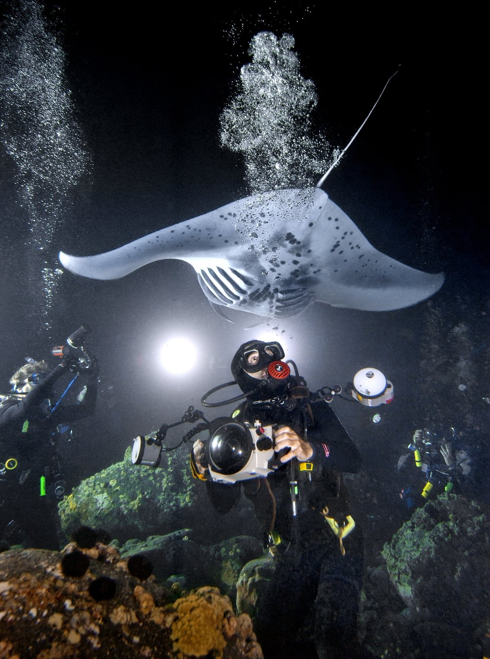 Underwater photographer Doug Perrine foreground, photographs large pacific manta rays at night in Kona, Hawaii on Tuesday May 27, 2008.