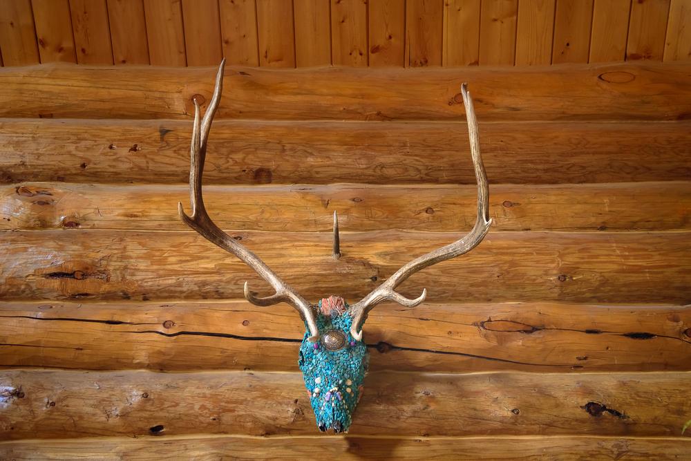 calamity_pass_trading_co_turquoise_elk_skull.jpg