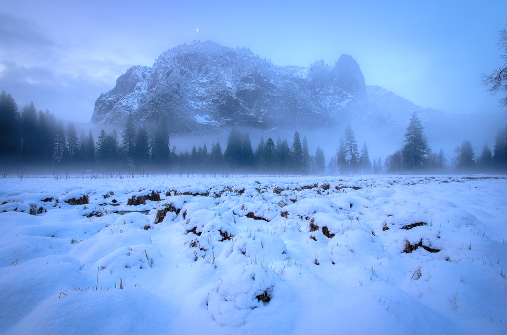 Spring fog compliments of early April snow on Yosemite Valley's floor.