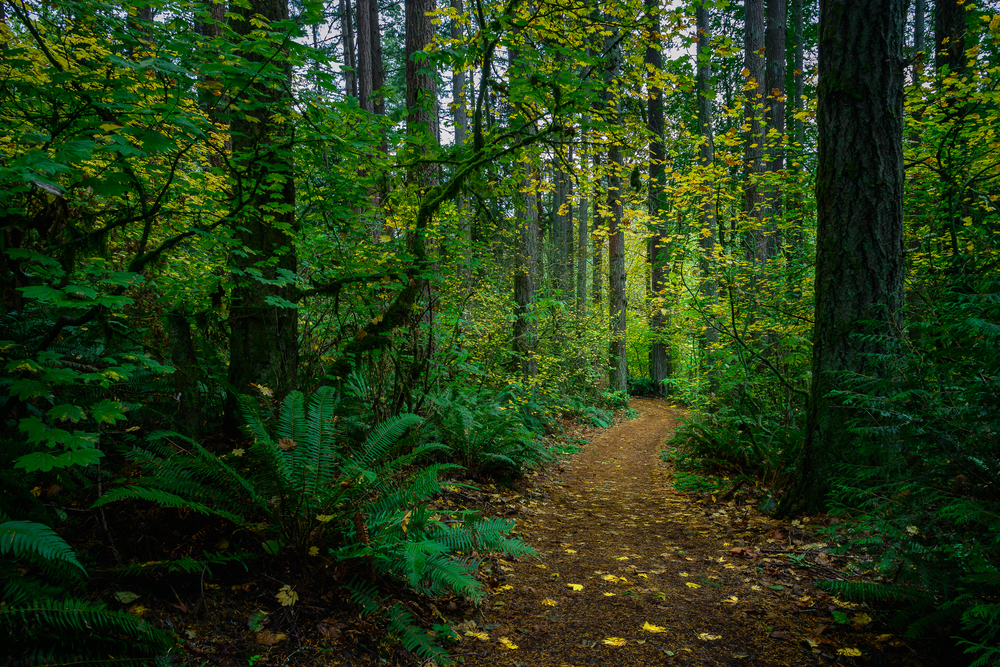 Tryon Park. SW Portland.
