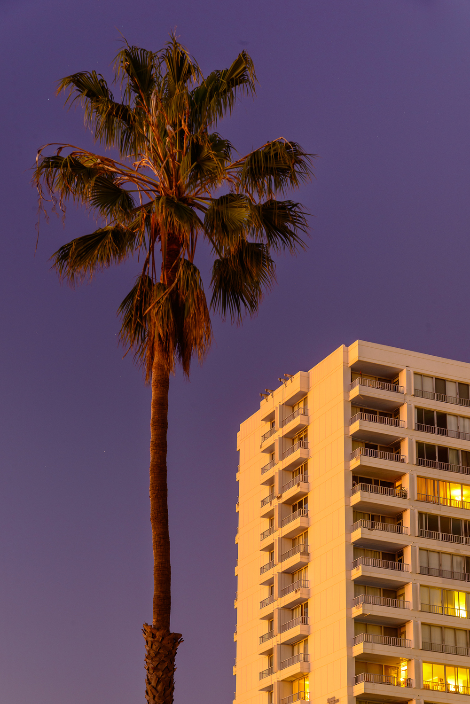 It's amazing how much I miss abundant palm trees. Santa Monica, CA