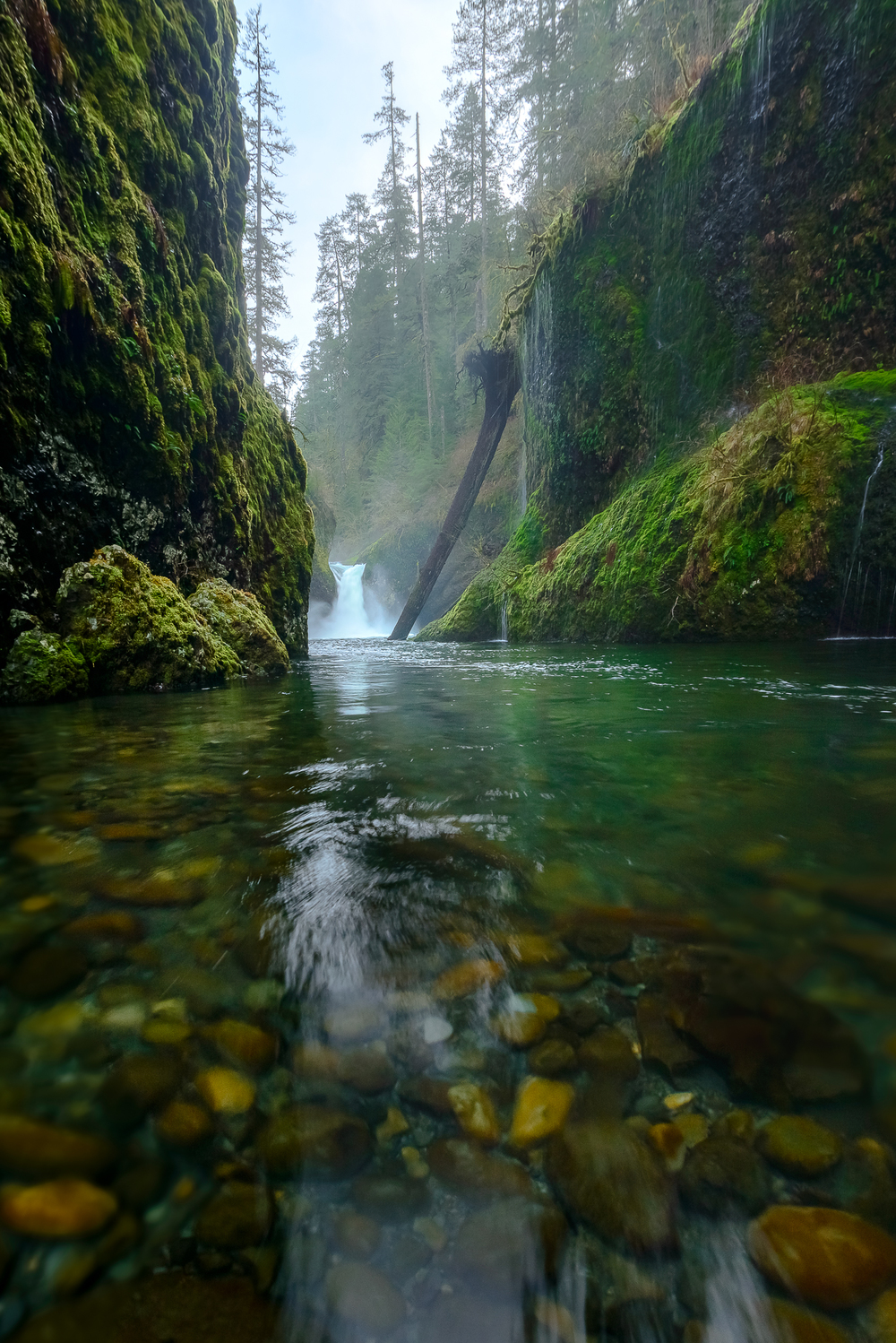 To get this view I had to don fishing waders and scurry out into the creek flow.  Unfortunately I had to do it twice since I slipped the first time, filling my waders and completely soaking myself.  It was only 48 degrees out so....no big deal.  Punchbowl Falls, OR.