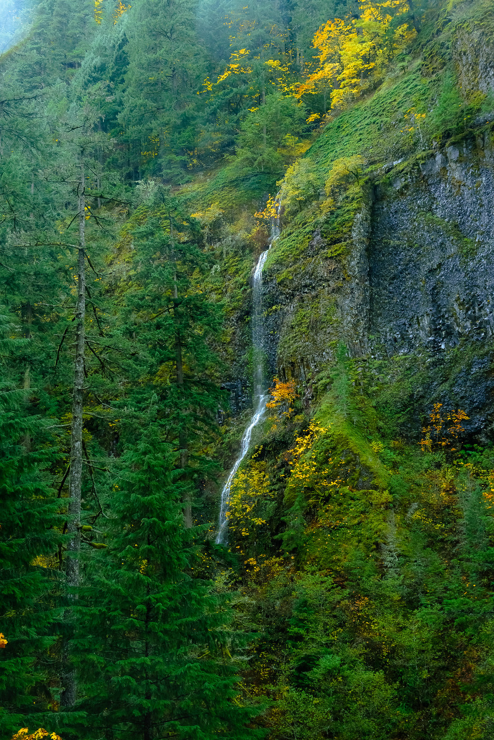 An early encounter with The Gorge.  Columbia River Gorge, OR..