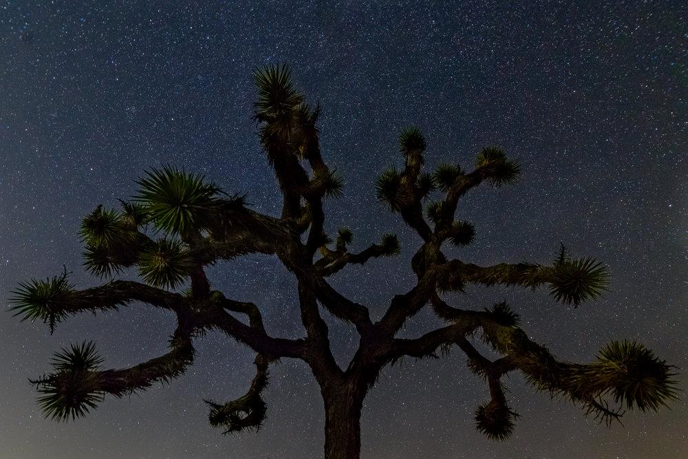down_dusty_trails_joshua_tree_wizard_tree_night.jpg
