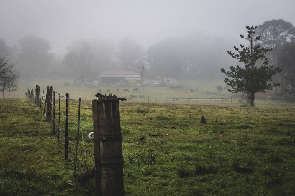 Let's Get Foggy