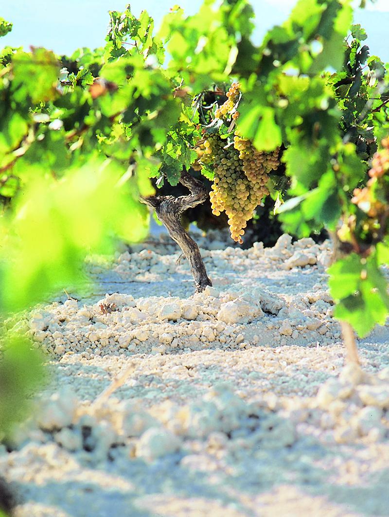 vinos_jerez_sherry_wines_albariza_y_cepas_.jpg