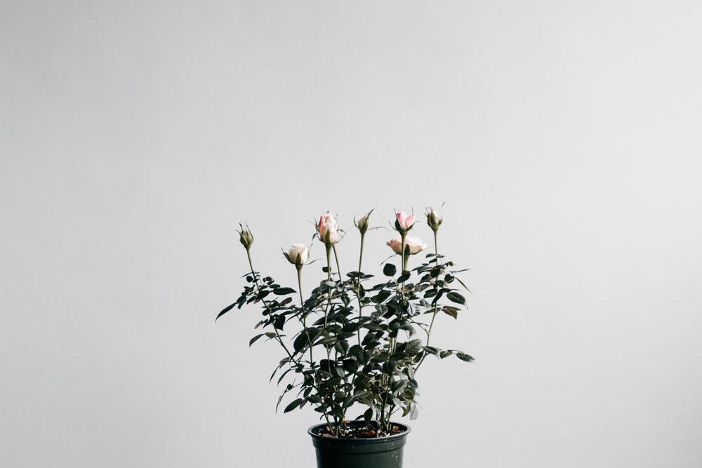 minimalism_4.jpg