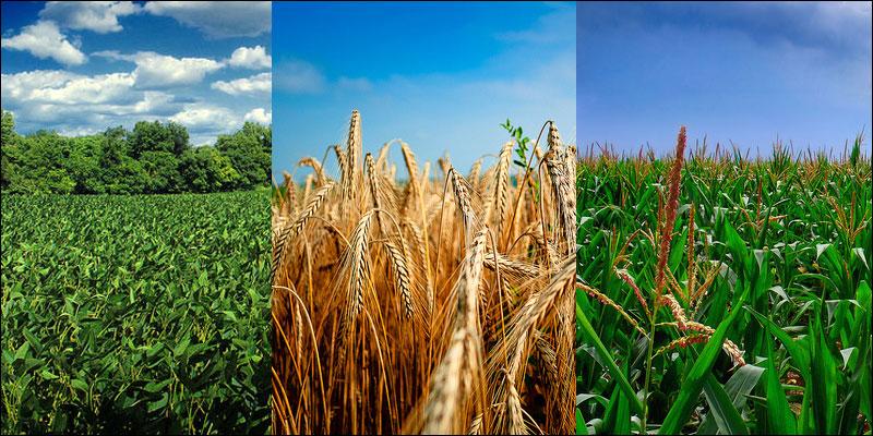 Photo credit: Flickr | corn/soy: Nichaloas A. Tonelli, wheat: Zarko Susnjar