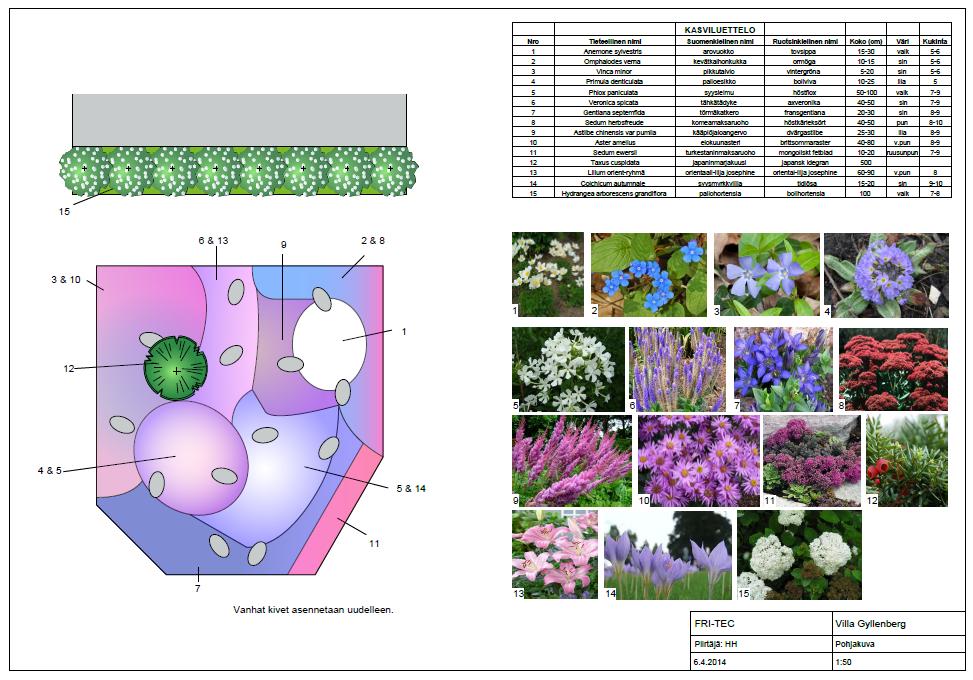 gyllenberg kasvisuunitelma.PNG