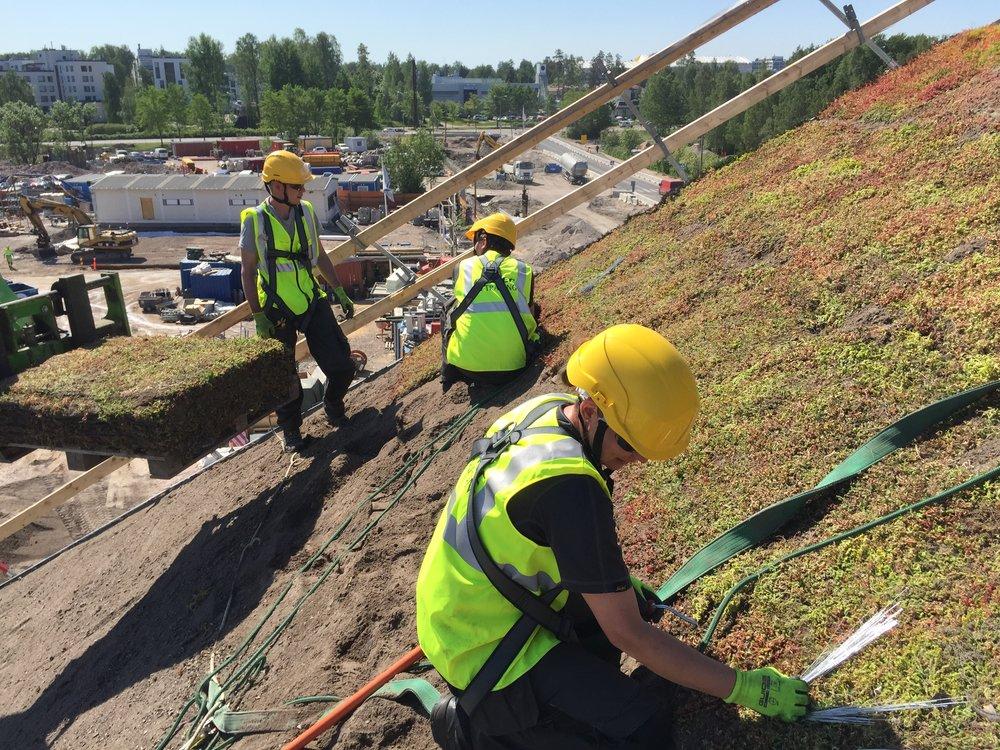 Nordic Green Roof valmiin maksaruohomaton asennus.