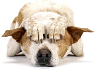 doganxiety3.jpg