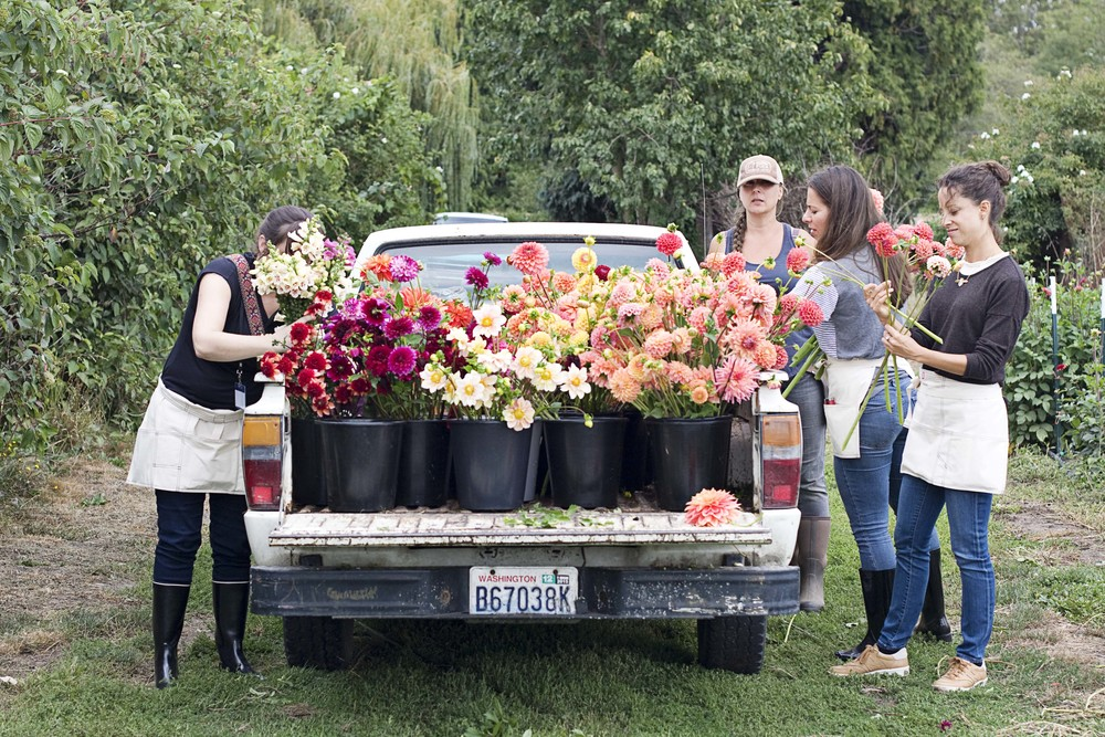 Truck full of dahlias.