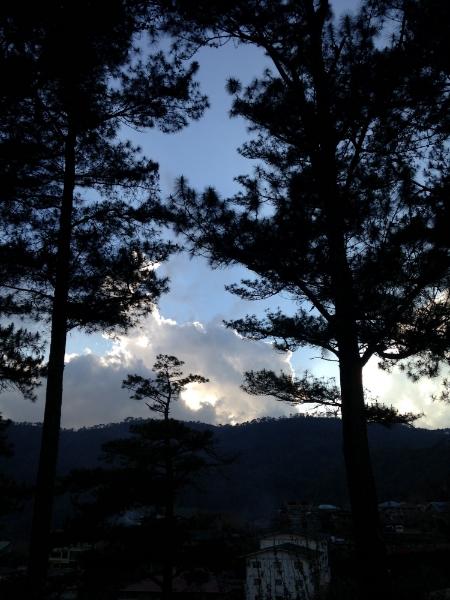 Trees in Sagada at dusk