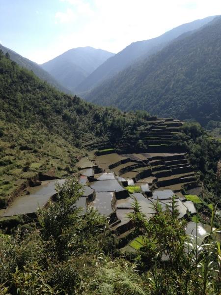 Rice terraces in-between Ifugao and Igorot territories