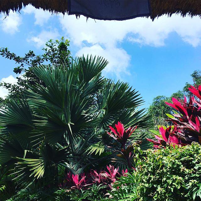 Bali baby #amihanlife #views #bali #travel #asia