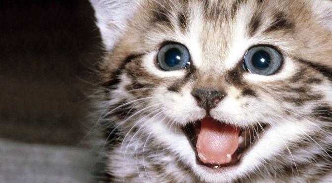 kitty1-922835-672x372