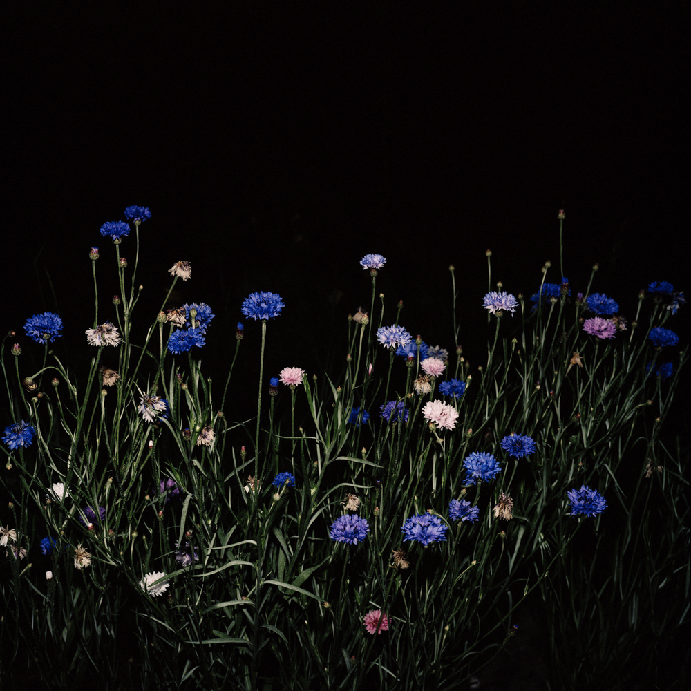 Night Flower 122