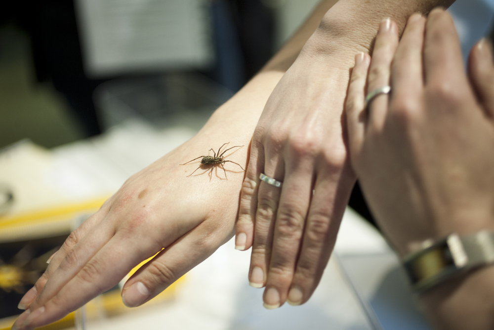 Friendly Spider Programme, Zoological Society of London.   TimeOut
