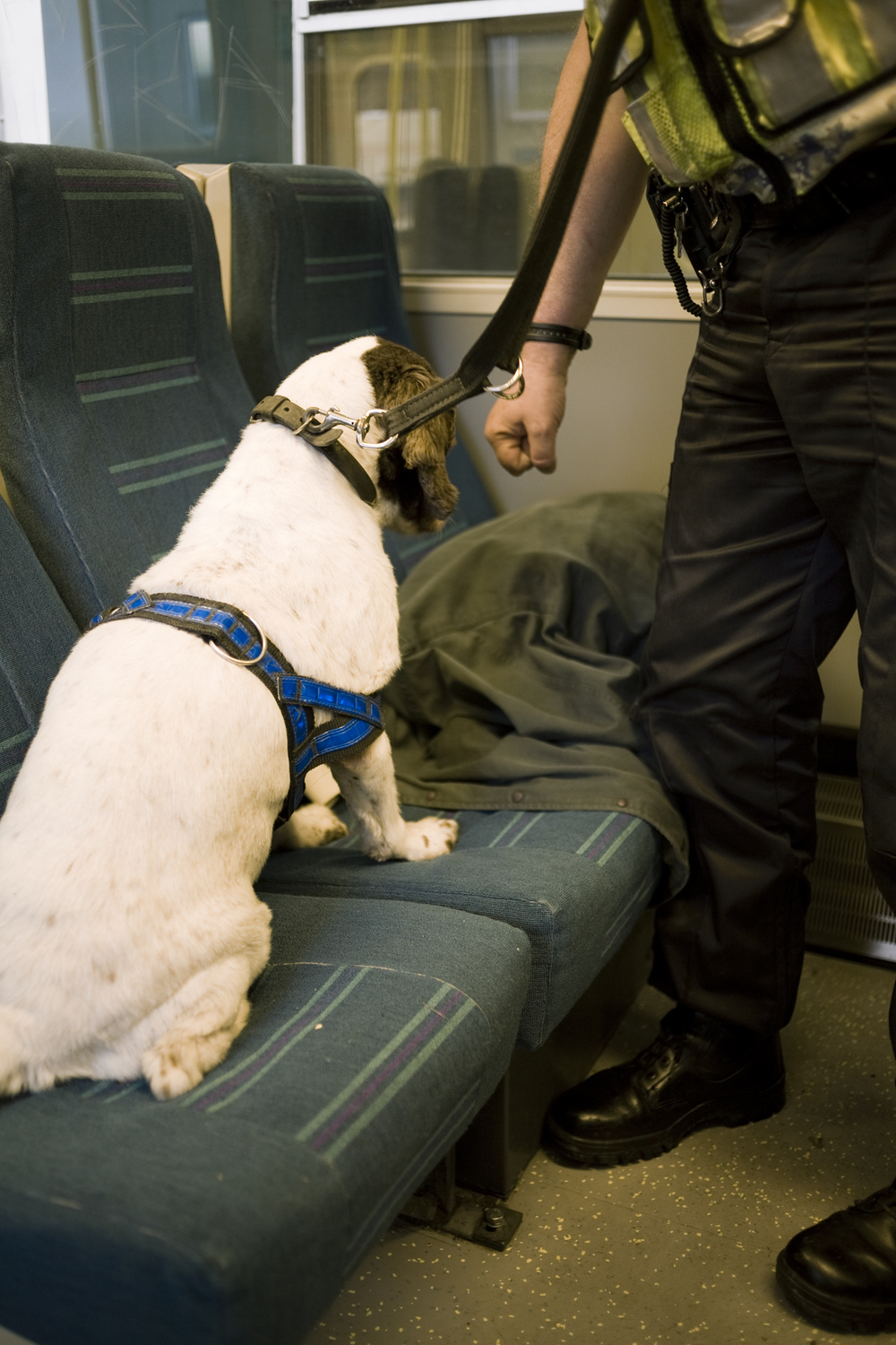 Police Sniffer Dogs   TimeOut