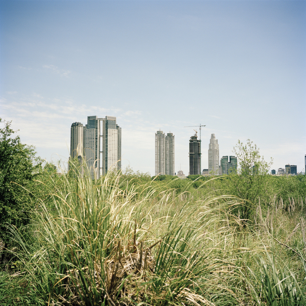 Skyscrapers of the Puerto Madero neighbourhood, viewed from the Buenos Aires Ecological Reserve.