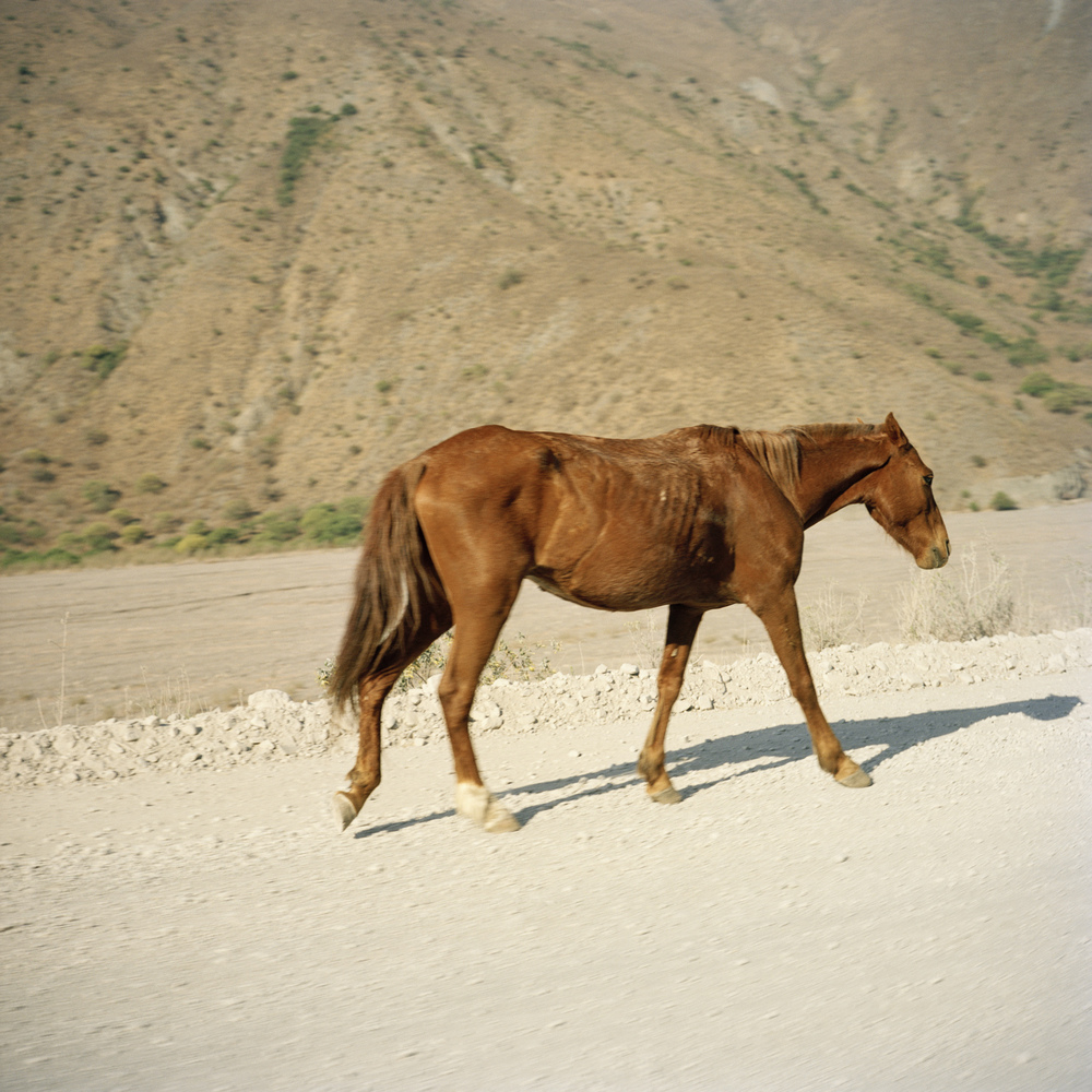 Salta Province. Del Toro's Ravine (Bull's Ravine). An emaciated horse walks along the road.