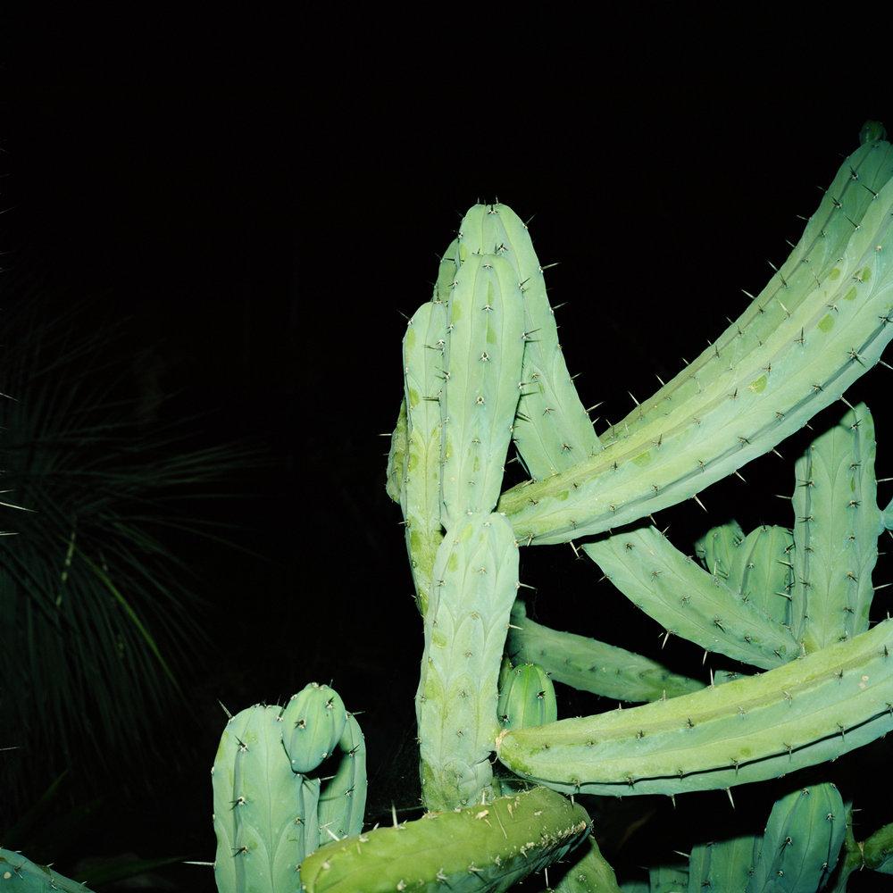 Night Cactus 003