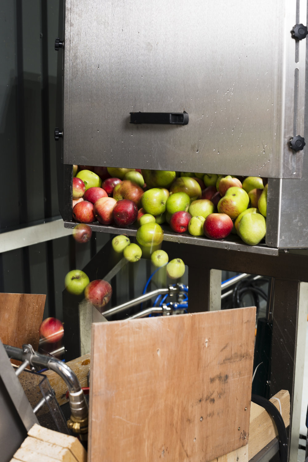 Apples being fed through the press at Hawkes Cider.