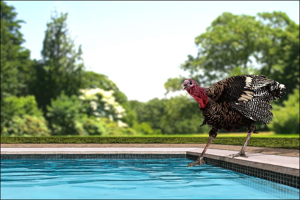 14_turkey.jpg