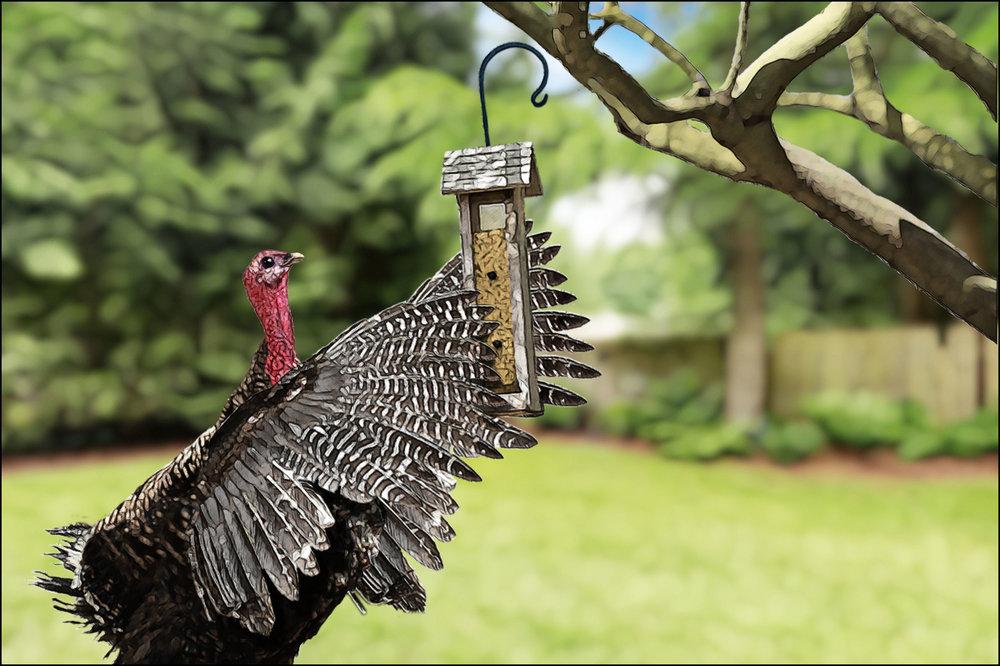 42_turkey.jpg
