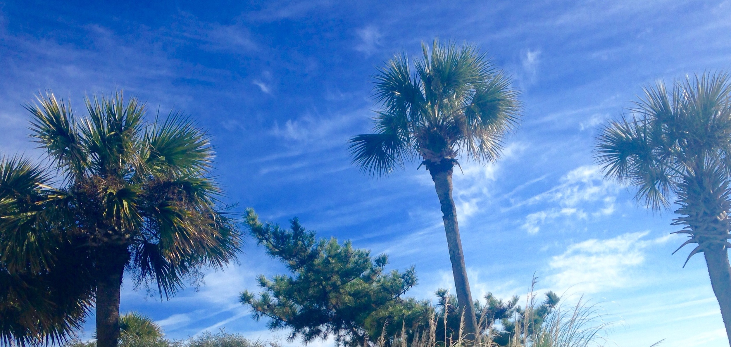 Palm Trees Myrtle Beach