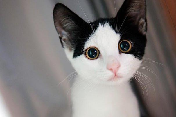 01-kitten-cuteness-1.jpg