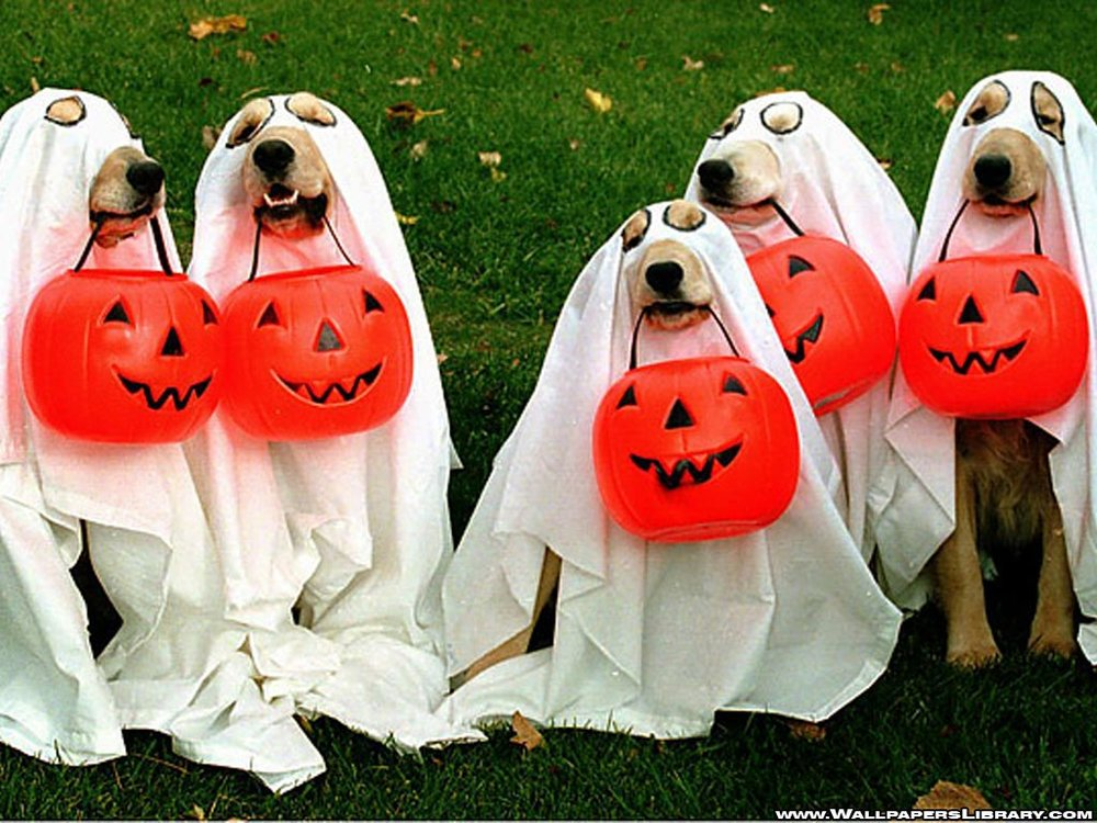 Bad-Pet-Costumes.jpg