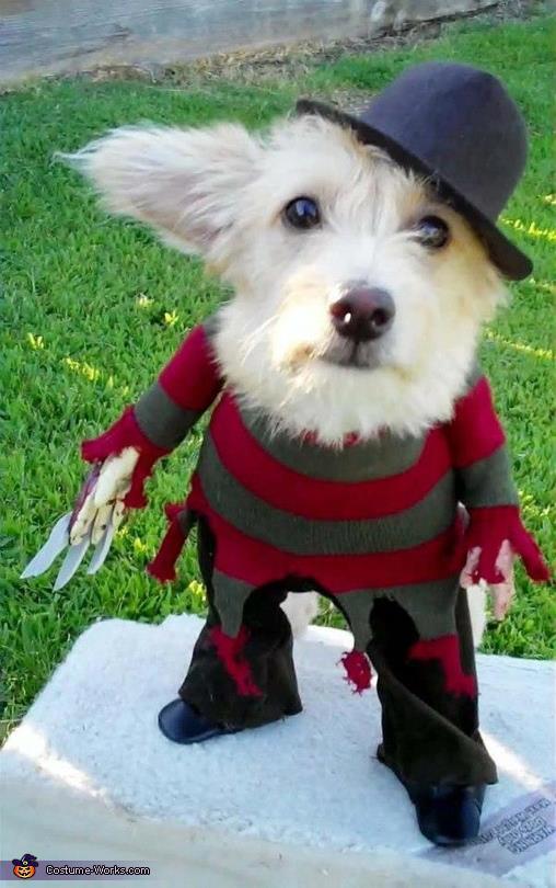 Funny-Halloween-Animal-Dog-Photo.jpg