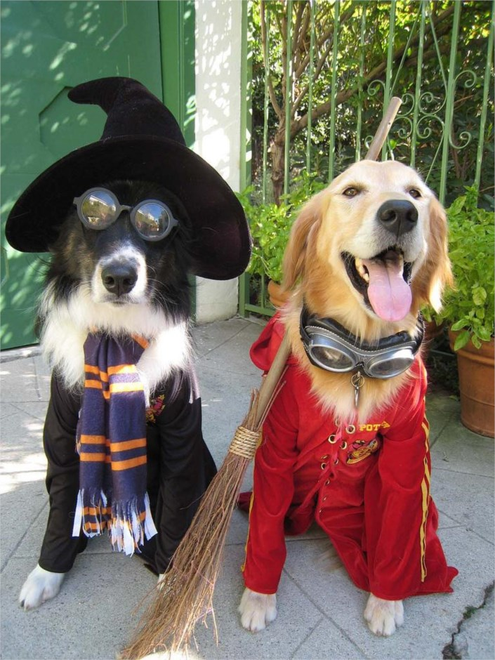 funny-dogs-dressed-in-costumes-4682.jpg