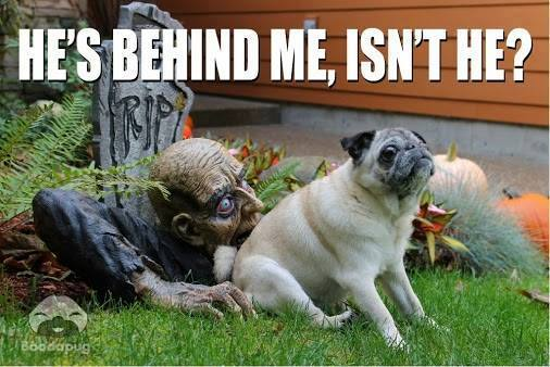 Funny-halloween-dog-pictures.jpg