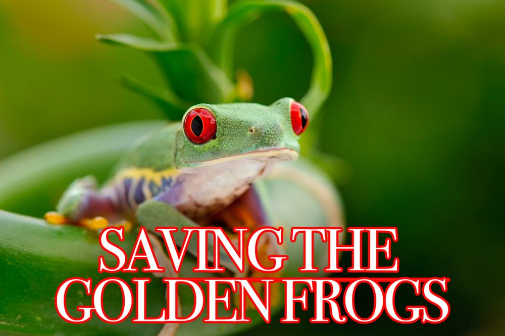 savingfrogs.png
