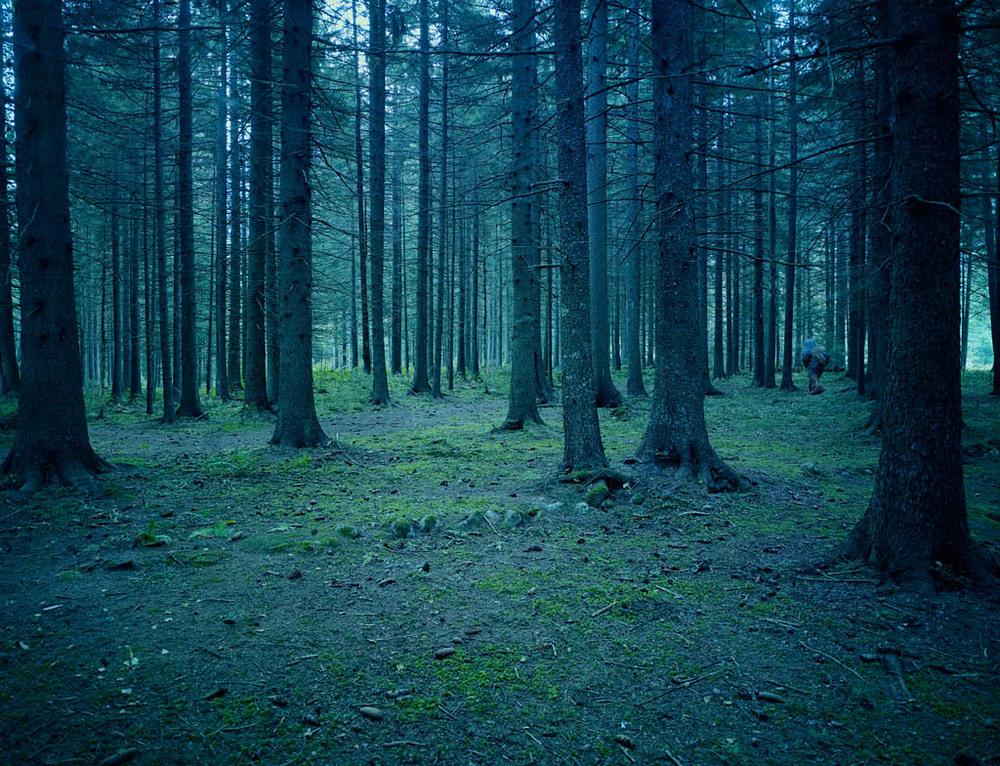 p_yeti_forest