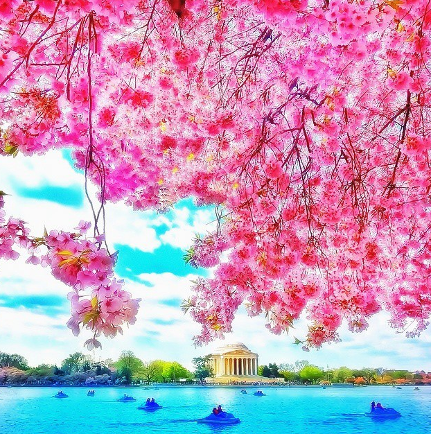 Washington D.C. Photo by @ms.luxuryworldtraveler